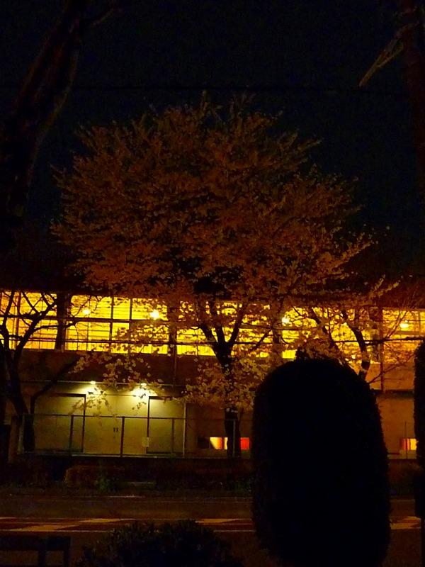 http://www.nimurasekizai.com/blog/P1010450.jpg