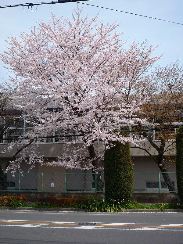 http://www.nimurasekizai.com/blog/P1010451.jpg