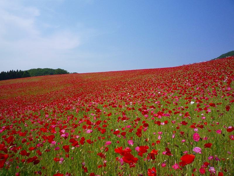 http://www.nimurasekizai.com/blog/P1010495.jpg