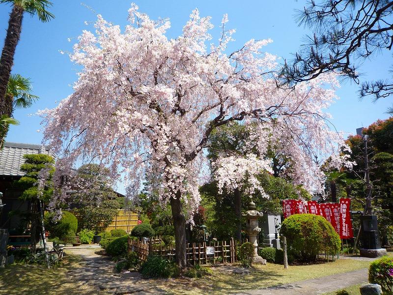 http://www.nimurasekizai.com/blog/P1020376.jpg